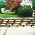 Hometown Garden by Corina Castillo