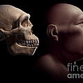 Homo Erectus With Skull by Science Picture Co