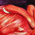 Homosassa Flamingo by Rhonda Hancock