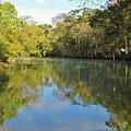 Homosassa River by D Hackett