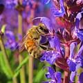 Honey Bee I by Michele Stoehr