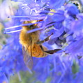 Honey Bee by Joanne Young