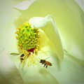 Honey Bees And Magnolia II by Joyce Dickens