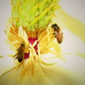 Honey Bees And Magnolia by Joyce Dickens