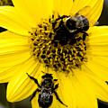 Honey Bees by David Lee Thompson