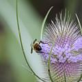 Honey Bum by Rasma Bertz