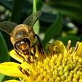 Honey Starts Here by T Guy Spencer