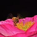 Honeybee In Flight 010 by George Bostian