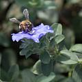 Honeybee On Blue Daze by JT Kramer