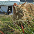 Honeysuckle Cat Hunting by Pat Nalls