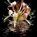 Honeysuckle Reflections Vertical by Gill Billington