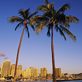 Honolulu And Palms by Carl Shaneff - Printscapes