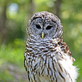 Hoo Are You by Kenneth Albin