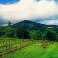 Hood River Oregon - Cloud Burst Over The Vineyard by Image Takers Photography LLC - Carol Haddon