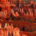 Hoodoos Of Sunset Point At Sunrise  In Bryce Canyon by Pierre Leclerc Photography