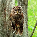 Hoot by Gina Welch