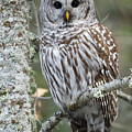 Hoot Hoot Hoot Are You by Beve Brown-Clark Photography