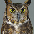 Hoot-owl - I'm Looking At You by Merton Allen