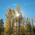 Hope For Fall  by Janet Kopper