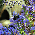 Hope  by Lydia Holly