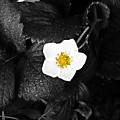 Hope Tucked Away In The Petals  by Dominic Livingstone