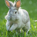 Hopping Rabbit by Stefan Rotter