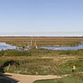 Horicon Marsh Wildlife Refuge by Ricky L Jones