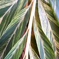 Horizon Of Palm by Chris Andruskiewicz