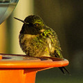 Horizontally Challenged Hummer by William Tasker