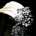 Hornbill Bird by Rose Santuci-Sofranko