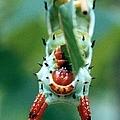 Horned Devil Catipillar 3 by J M Farris Photography