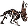 Horned Dinosaur Skeleton by Oleksiy Maksymenko