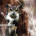 Horned Owl 9193 by Captain Debbie Ritter