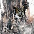 Horned Owl 9988 by Captain Debbie Ritter