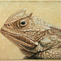 Horned Toad by James W Johnson