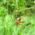 Hornet On Watermelon by Angi Nagel