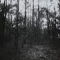 Horror In The Woods by Margie Hurwich