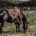 Horse 3 by Christy Garavetto