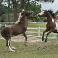 Horse Aerobics by Mary  Swann