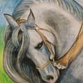Horse. by Agnieszka Praxmayer