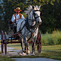 Horse And Buggy by Lone Dakota Photography