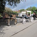 Horse And Buggy by Michelle Powell