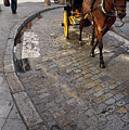 Horse And Carriage On Cobblestoned Alvarez Quintero Street In Th by Reimar Gaertner