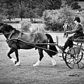 Horse And Cart by Mark Hunter