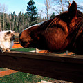 Horse And Cat Nuzzle by Thomas R Fletcher