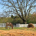 Horse And Hay by Todd Blanchard
