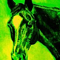 Horse Art Horse Portrait Maduro Green Black And Yellow by Bets Klieger
