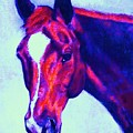Horse Art Horse Portrait Maduro Psychedelic by Bets Klieger