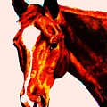 Horse Art Horse Portrait Maduro Red With Yellow Highlights by Bets Klieger
