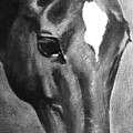 Horse Art Horse Portrait Red Black And White by Bets Klieger